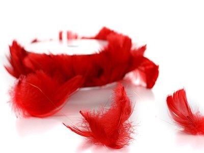 Draad met veren rood